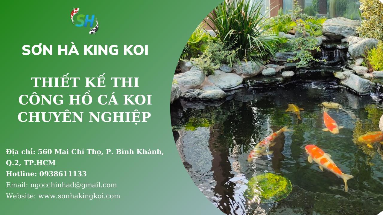 Sơn Hà King Koi chuyên cung cấp dịch vụ thiết kế thi công hồ cá Koi đẹp