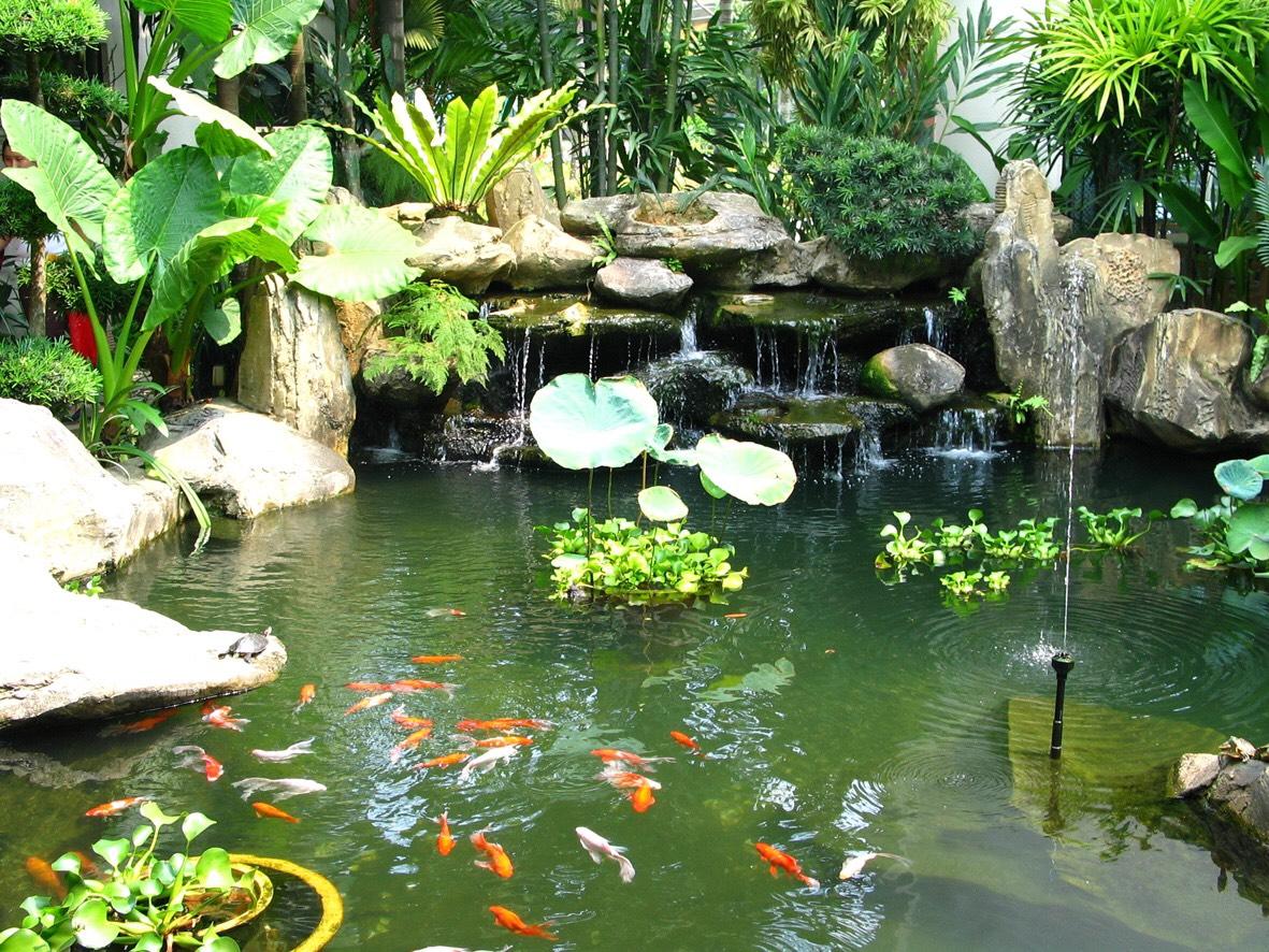Tiểu cảnh sân vườn hồ cá koi