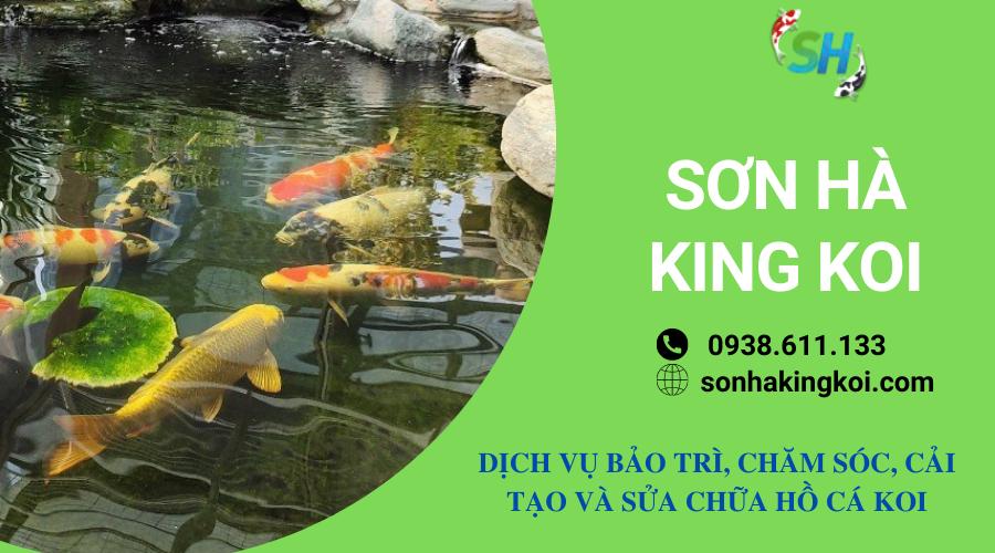 Bảo trì và chăm sóc hồ cá KOI định kỳ
