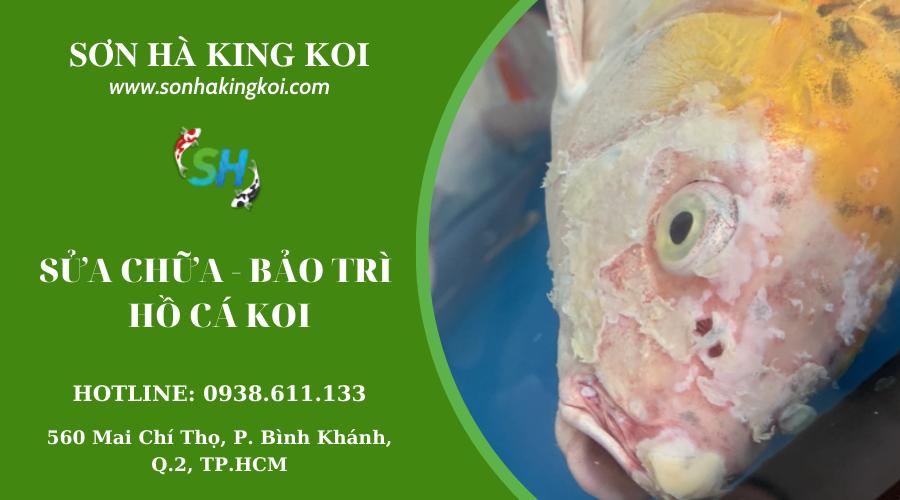 Dịch vụ sửa chữa và bảo trì hồ cá Koi