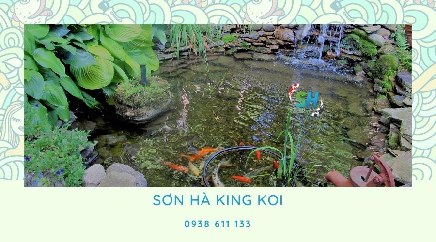 hồ cá Koi đẹp